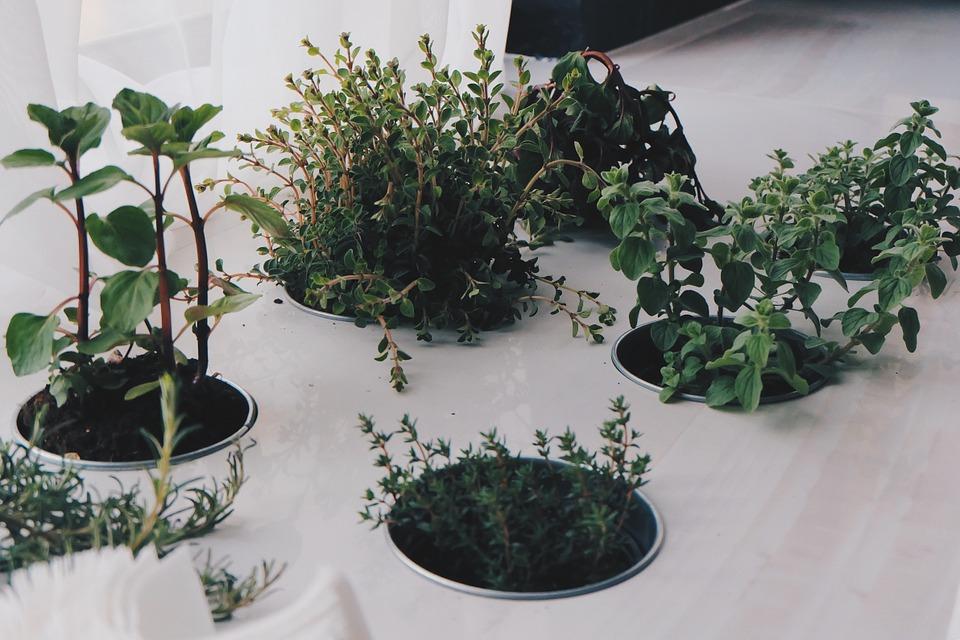 5 Plantes Aromatiques Que Tu Peux Facilement Faire Pousser Dans Ta